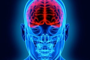blue image of the brain Queener Law
